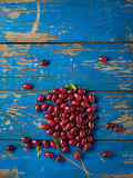 Cornelian or dogberry Royalty Free Stock Images