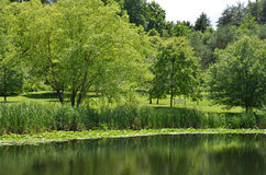 Cornell Botanical Garden-de zomervijver het plaatsen Stock Foto's