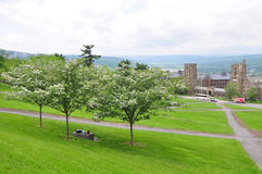 Cornell Campus landscape Royalty Free Stock Photography