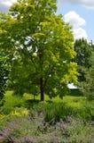 Cornell ogródów botanicznych wierzchu przejażdżki ogród Zdjęcia Royalty Free