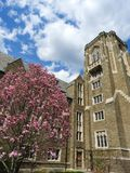 Cornell University Quad Magnolia na flor da mola fotos de stock