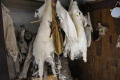 Cornemuses des peaux de chèvre, des peaux et de tambour de basque Images libres de droits