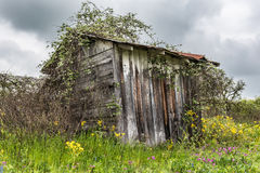 Corner angle of a shed overgrown with vegetation. Shed overgrown with vegetation in field of wildflowers.  Capture on rainy cloudy day Royalty Free Stock Photos