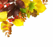 Corner Border of colored falling leafs on white background Stock Photo