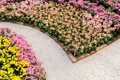 Corner of botanic garden with flowers Stock Photography
