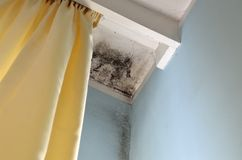 Corner of ceiling with mold Stock Photos