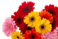 Corner colorful Gerber flowers Stock Photos