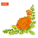 Corner composition. Orange rose flowers with leaves, buds and fern. Vector illustration. Beautiful floral frame. Isolated Royalty Free Stock Photo
