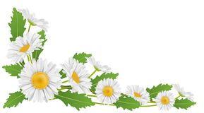 Corner decoration with white daisy flower and leaf. Corner decoration with white daisy flower and green leaf for horizontal banner. Vector illustration for Stock Images
