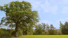 Corner of a field. Tree in the corner of a field with a blue cloudy sky behind and tees off in the distance stock photos