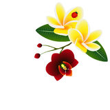 Corner with frangipani Plumeria with orchid flower and a ladybug. royalty free illustration