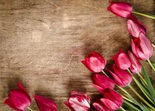 Corner from fresh tulips Royalty Free Stock Image