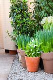 Corner of a garden with pots full of green plants and flowers flowers on pebble, Vertical stock images