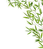 Corner from green bamboo branches  on white Stock Images