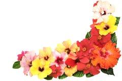 Corner with hibiscus flowers Stock Photo