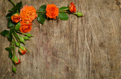 Corner made of roses with leaves Royalty Free Stock Photography