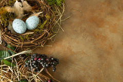Corner with nest and eggs Stock Photo
