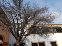 Corner of an old house with a tree in Tequisquiapan. Located in the state of Queretaro, travel and tourism stock image