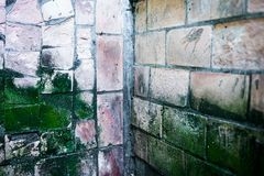The corner of the old wall with dirty moldy tiles Stock Images