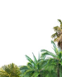 Corner from palm tree foliage isolated on white. Background stock photography