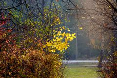 The corner of the park with multicolored autumn trees and bushes_. The corner of the park with multicolored autumn trees and bushes stock photo