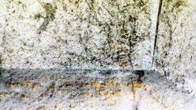 Corner of the room with spider web and spots of black mold and many cold water drops on the white wall. And brown wooden floor. Dangerous toxic fungus mold on Royalty Free Stock Photography