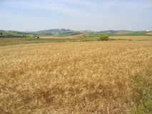 Corner of a spanish field countryside background Royalty Free Stock Photos
