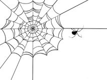 Corner Spider Web. A spiders web with a black widow spider on it Stock Images
