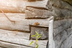 Corner of a wall of an old wooden abandoned house. royalty free stock photography