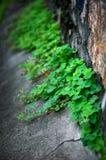 Corner of the weeds Stock Image