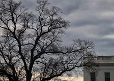 Corner of the White House on a gloomy day with a barren tree in wintertime. Royalty Free Stock Photo