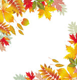 Corners with autumnal leaves Royalty Free Stock Photography