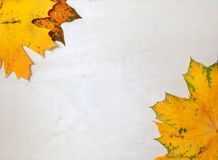 In corners of white sheet lay yellow maple leaves Royalty Free Stock Images
