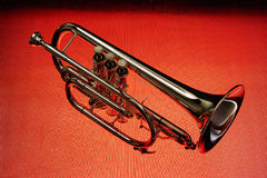 Cornet 01 Royalty Free Stock Images