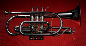 Cornet 05 Royalty Free Stock Photo