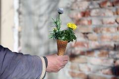 Cornet avec des fleurs Image libre de droits