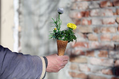 Cornet with flowers. Bouquet of spring flowers in an ice cream cornet, man gift for a woman Royalty Free Stock Image