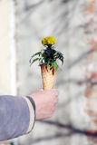 Cornet with flowers. Bouquet of spring flowers in an ice cream cornet, man gift for a woman Royalty Free Stock Photos