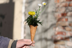 Cornet with flowers. Bouquet of spring flowers in an ice cream cornet, man gift for a woman Royalty Free Stock Images