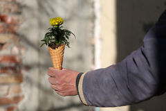 Cornet with flowers. Bouquet of spring flowers in an ice cream cornet, man gift for a woman Royalty Free Stock Photo