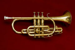 Cornet. On a red background Stock Photos