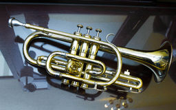 Cornet. The cornet on reflecting surface Royalty Free Stock Photo