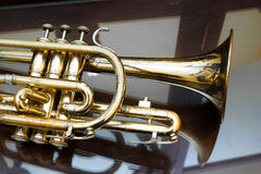 Cornet. The cornet on reflecting surface Stock Image