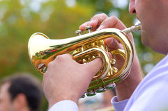 Cornet in street wind orchestra Stock Photo