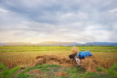 Cornfield βουνό ρυζιού αγροτών Στοκ Εικόνες