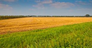 cornfield ολλανδικά που συγκο Στοκ Εικόνα
