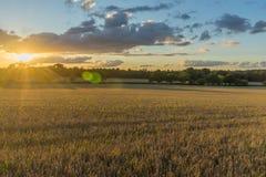 cornfield πέρα από το ηλιοβασίλεμα Στοκ φωτογραφία με δικαίωμα ελεύθερης χρήσης