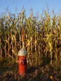 cornfield στόμιο υδροληψίας πυρ&kap Στοκ Εικόνες