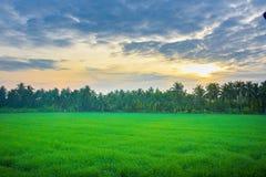 Cornfield το πρωί στην Ταϊλάνδη, όμορφο πράσινο cornfield με το υπόβαθρο ουρανού ηλιοβασιλέματος Στοκ Φωτογραφία