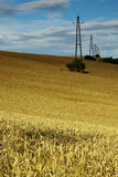 Cornfield. View of landscape with cereal field Royalty Free Stock Photography